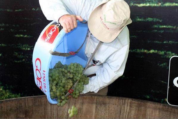 O vinho bandeirante da Góes, em São Roque / Divulgação