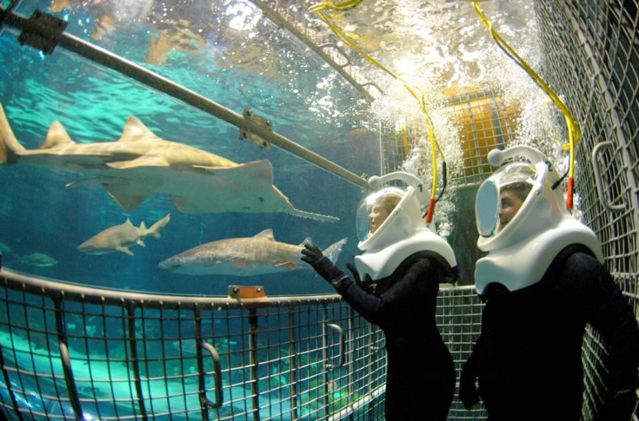 Na atração Sharks Deep Dive, do SeaWorld, os visitantes usam um capacete Sea Trek, para contato com tubarões