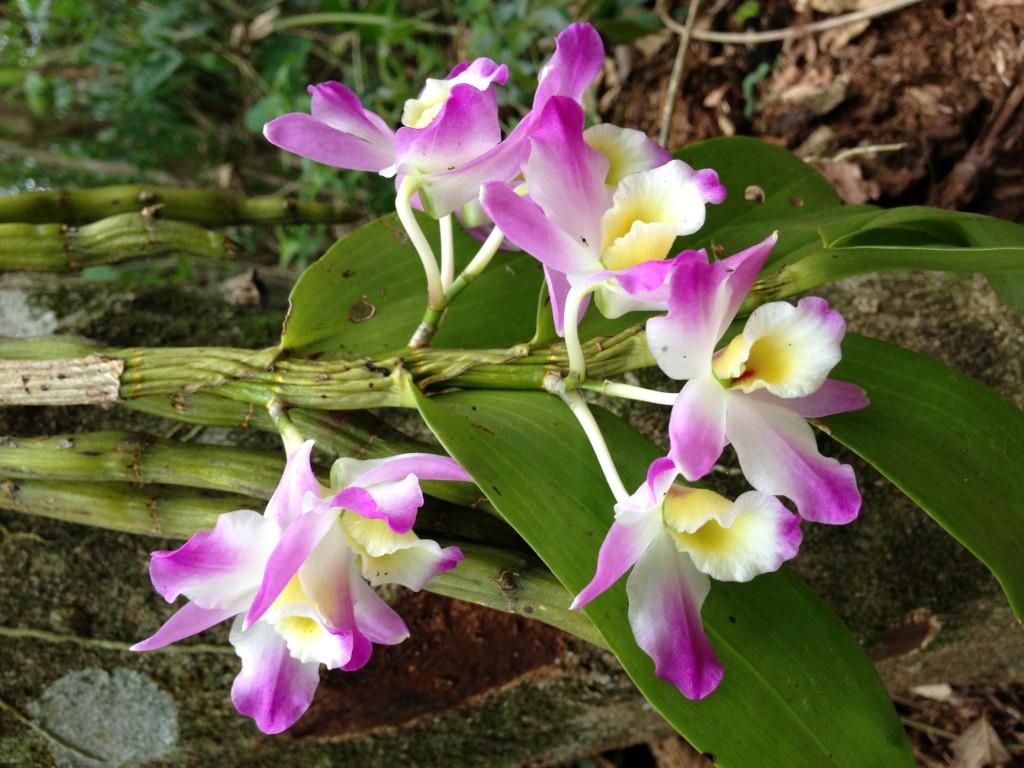 Orquídea caída pela trilha / Divulgação