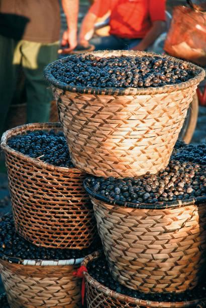 O Pará é o maior produtor nacional de Açaí, que pode ser encontrado na Feira do Açaí em Belém (PA)