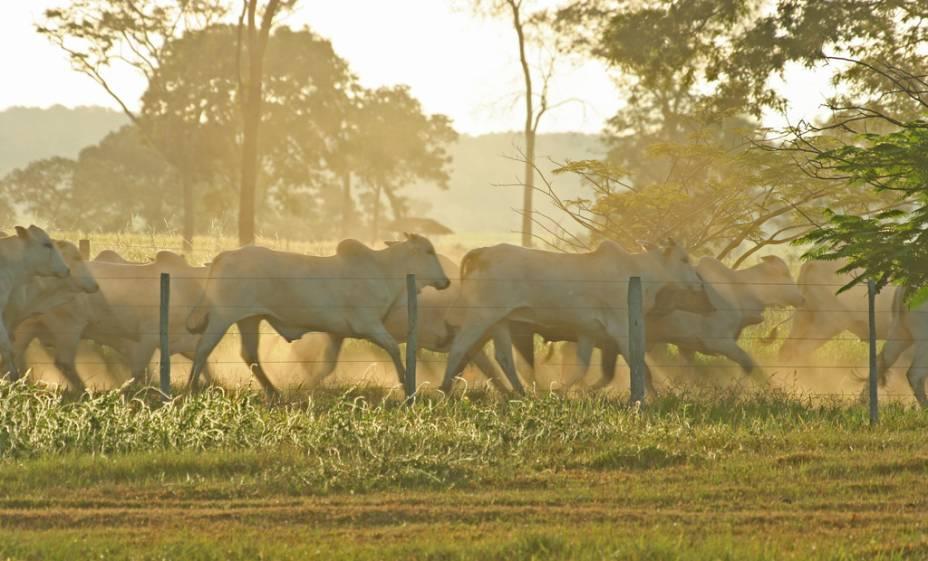 A criação de gado é a principal atividade econômica do Pantanal