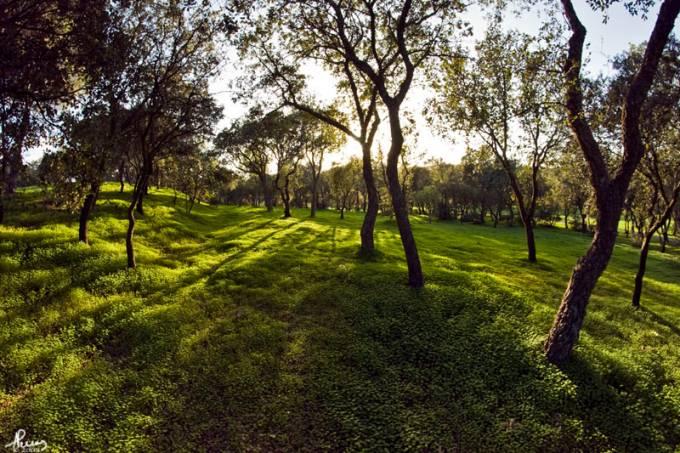 parque-florestal-de-monsanto-anpena-creative-commons.jpeg