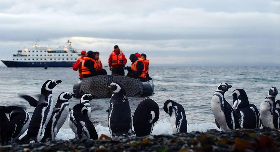 Foto de visita à Ilha Magdalena, morada dos Penguins de Magalhães, uma das paradas do cruzeiro com rota de Ushuaia a Punta Arenas, em território chileno, realizado pela Cruceros Australis. A viagem passa pelo Cabo Horn, ponto de encontro entre os oceanos Atlântico e Pacífico.