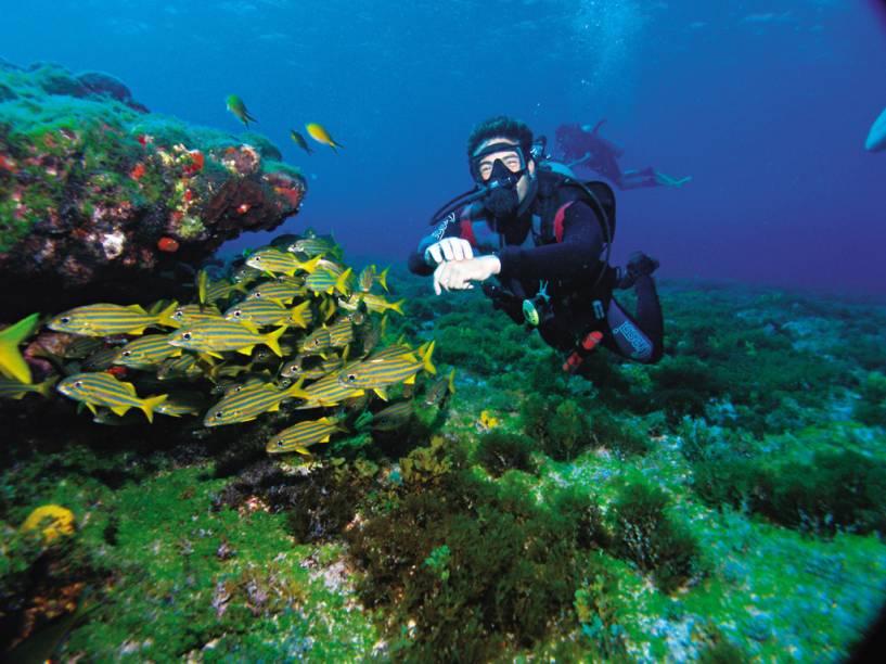 Os tons de azul multiplicam-se no mar de Fernando de Noronha (PE), onde a visibilidade chega a 50 m na horizontal e temperatura média de 27°C. O Arquipélago é o melhor ponto de mergulho do país