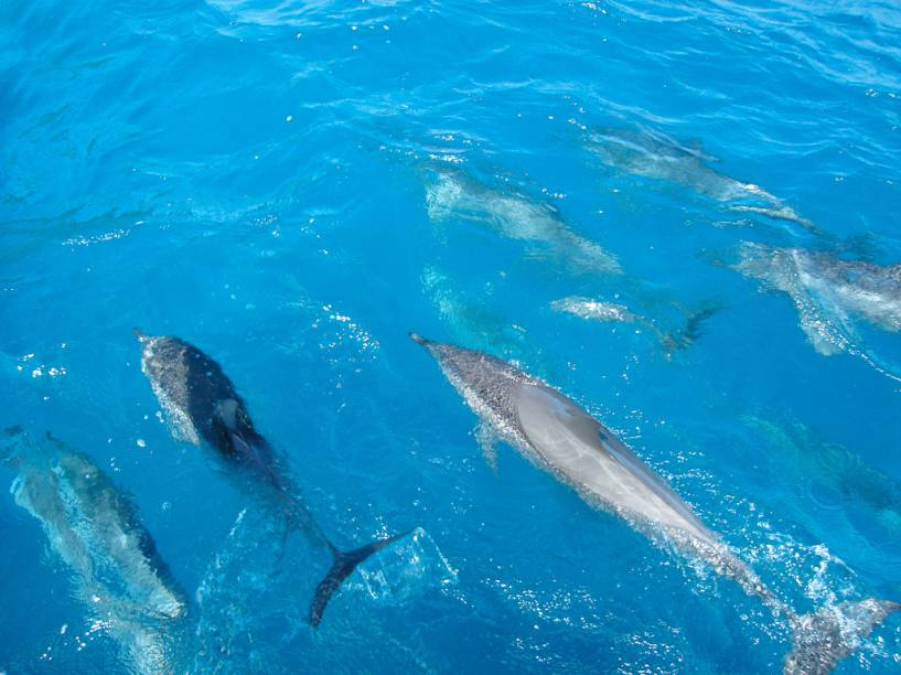 Os golfinhos-rotadores receberam esse nome graças aos saltos acrobáticos, nos quais giram sobre o próprio eixo. Podem ser observados na Baía dos Golfinhos, em Fernando de Noronha (PE)