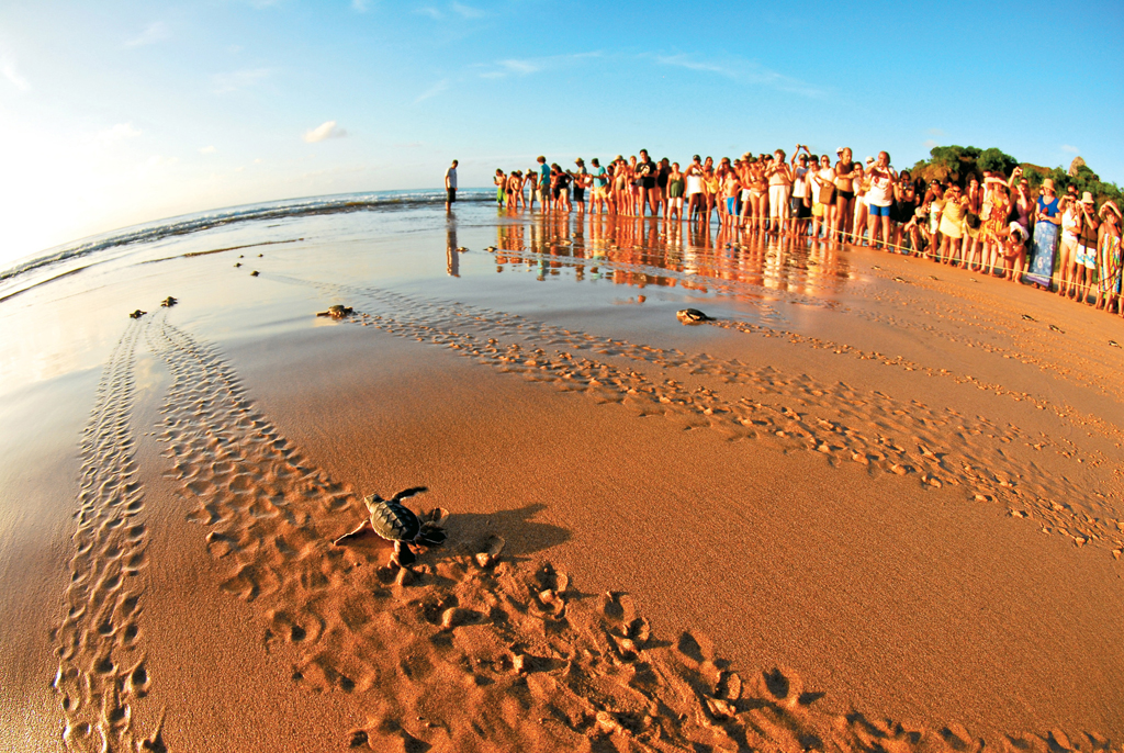 """Turistas assistindo a """"Abertura de Ninho"""", soltura dos filhotes das tartarugas marinhas do Projeto Tamar, na Praia do Boldró, Fernando de Noronha (PE)"""