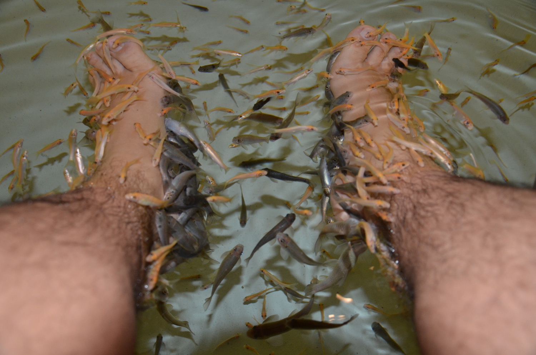 Peixes, Kuala Lumpur, Malásia