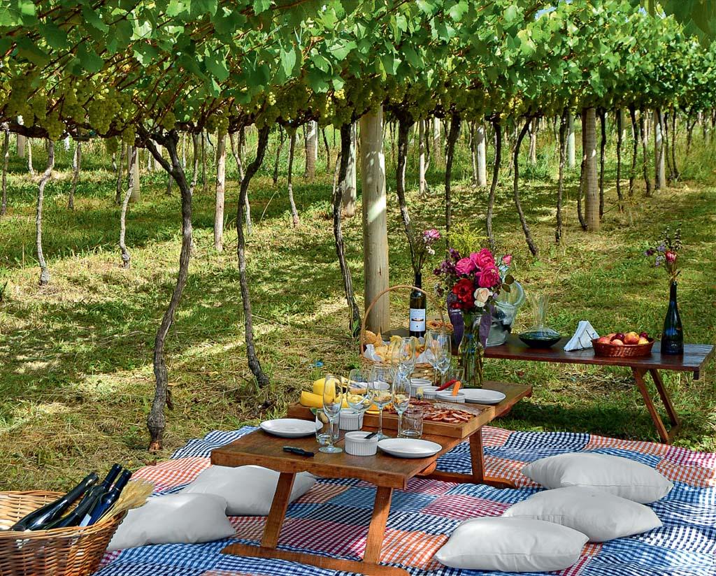 Piquenique sob as parreiras na vinícola Monte Agudo