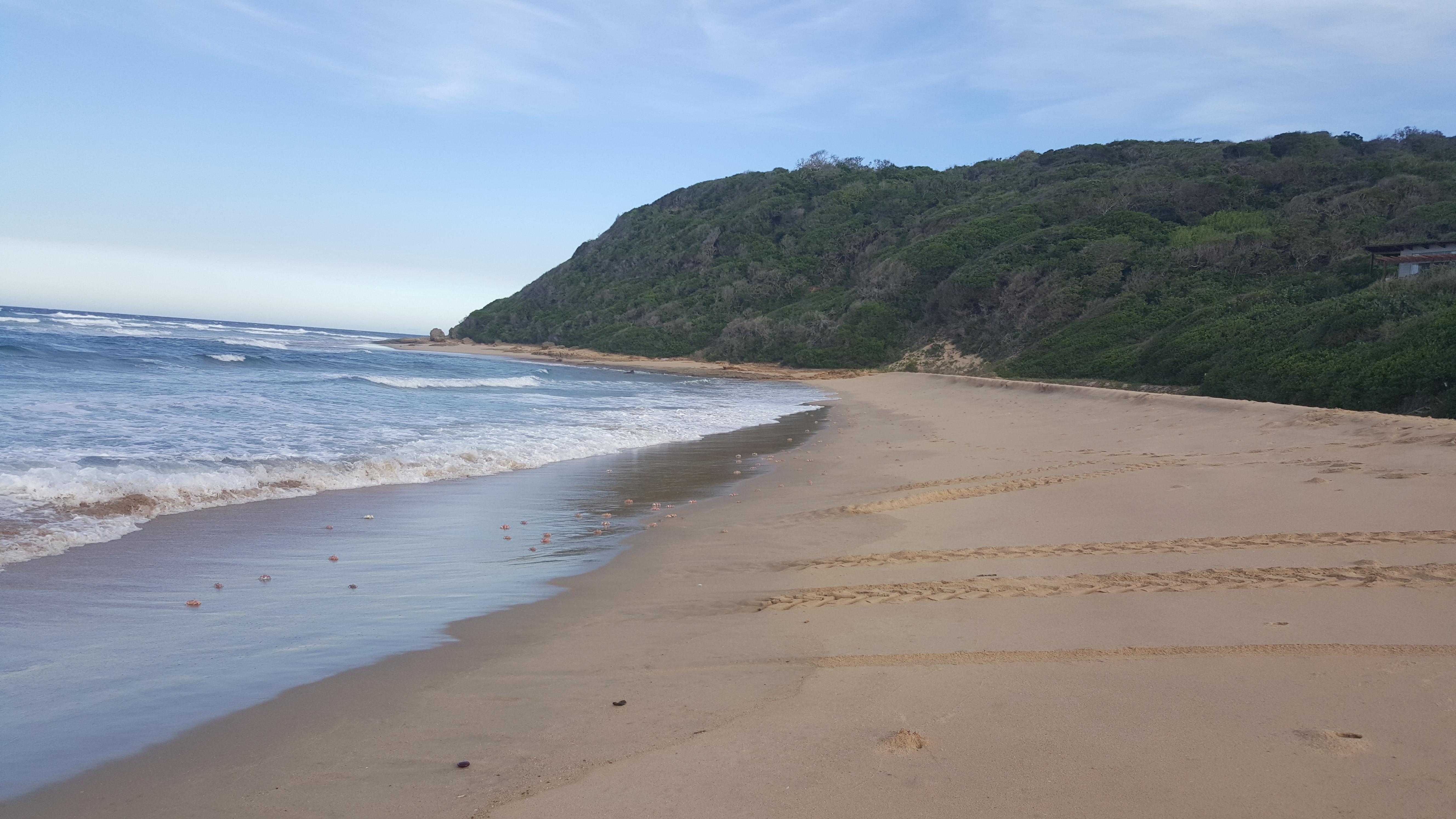 Milhares de caranguejos correndo pela praia