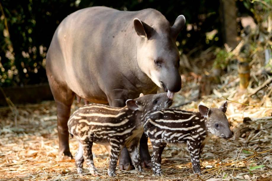 Refúgio Biológico Bela Vista, em Foz do Iguaçu (PR), foi criado para receber animais resgatados após a construção do Lago de Itaipu