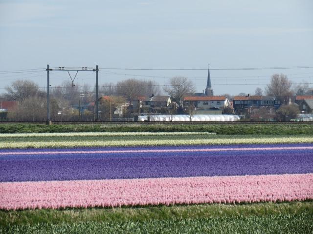 Primavera_Holanda - 1 (1)