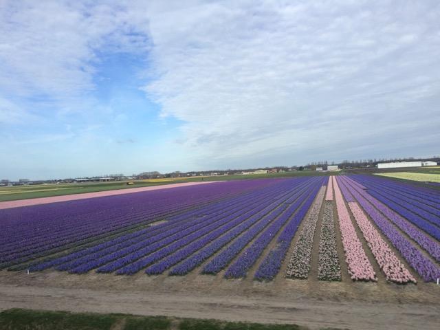 Primavera_Holanda - 10