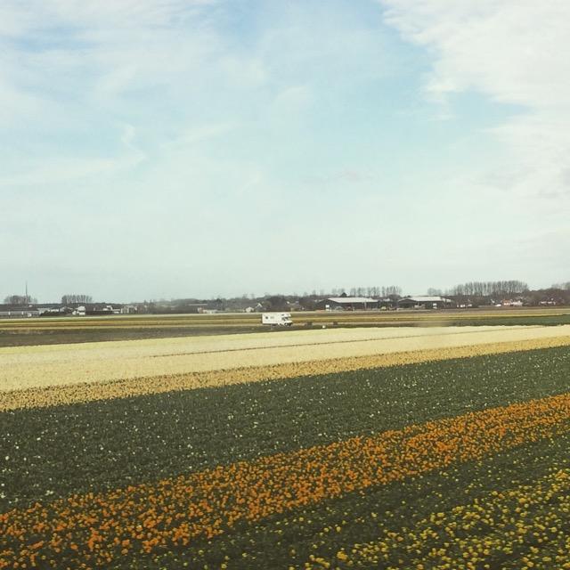 Primavera_Holanda - 12