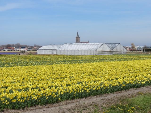 Primavera_Holanda - 6