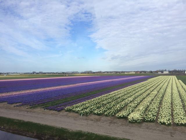 Primavera_Holanda - 9