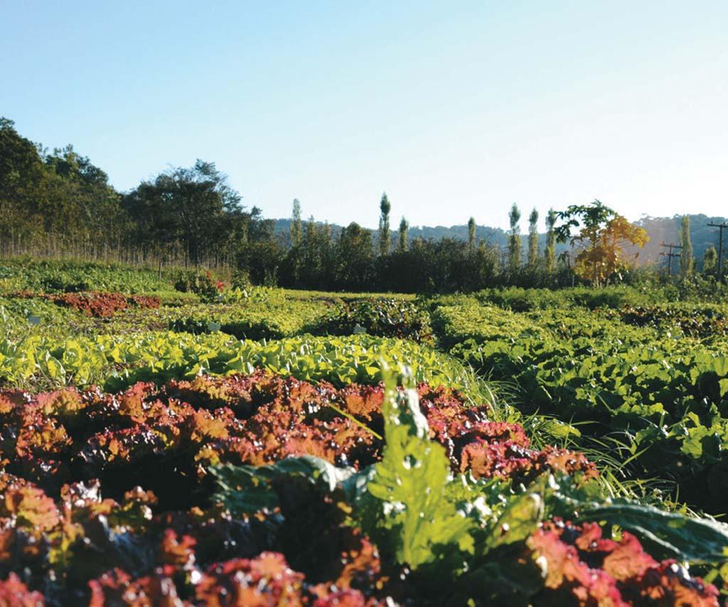 O quintal da Fazenda Galo Vermelho