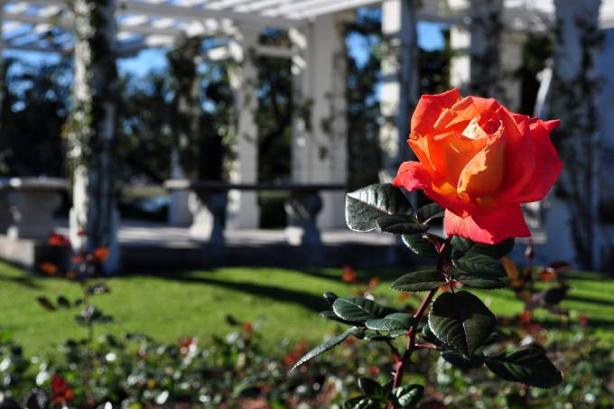 rosedal-buenos-aires-argentina-fabian-kron-flickr-creative-commons.jpeg