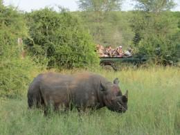 Safári no Kruger Park- tudo o que você precisa saber antes de ir
