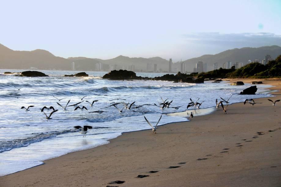 Com mar agitado e bom número de pousadas a Praia dos Amores, em Balneário Camboriú (SC), é boa para a prática de surfe