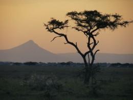 Serengeti X Kruger- um duelo entre os parques nacionais mais famosos da África