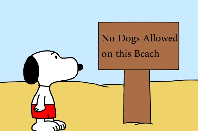 Snoopy não seria vetado nas pousadas abaixo / Reprodução