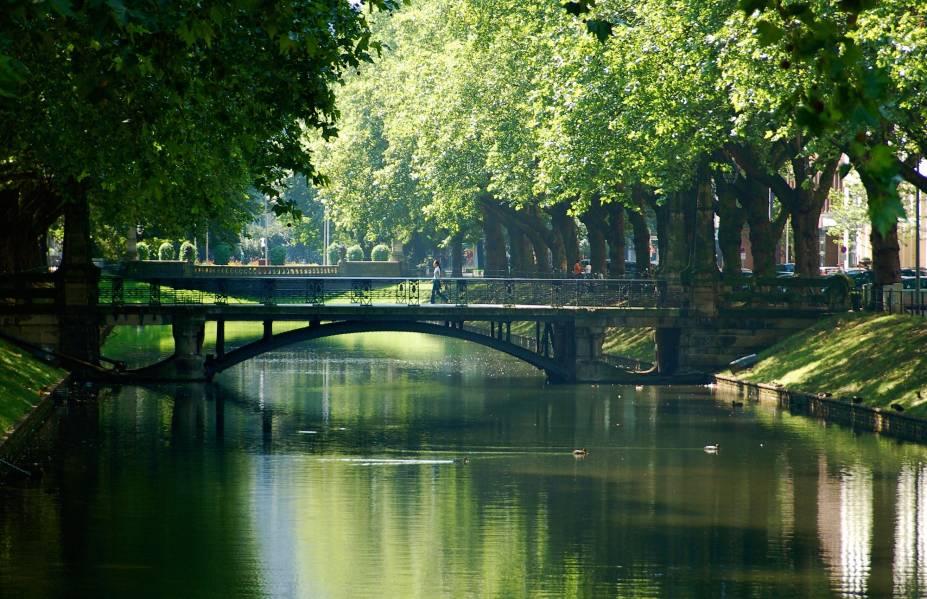À beira do rio Reno, as árvores de Düsseldorf ficam irresistíveis para um clique no verão