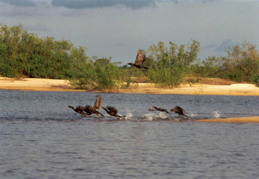 Aves no Parque Estadual do Cantão em Caseara, Tocantins