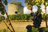 Uvas e torre medieval nos vinhedos em Medoc, Bordeaux, França