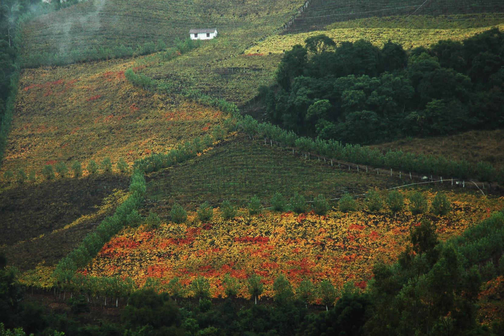 Vale dos Vinhedos em Bento Gonçalves, Rio Grande do Sul