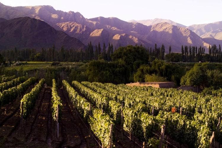 Toda a província de Salta possui amplos vinhedos, muitos dos quais podem ser visitados