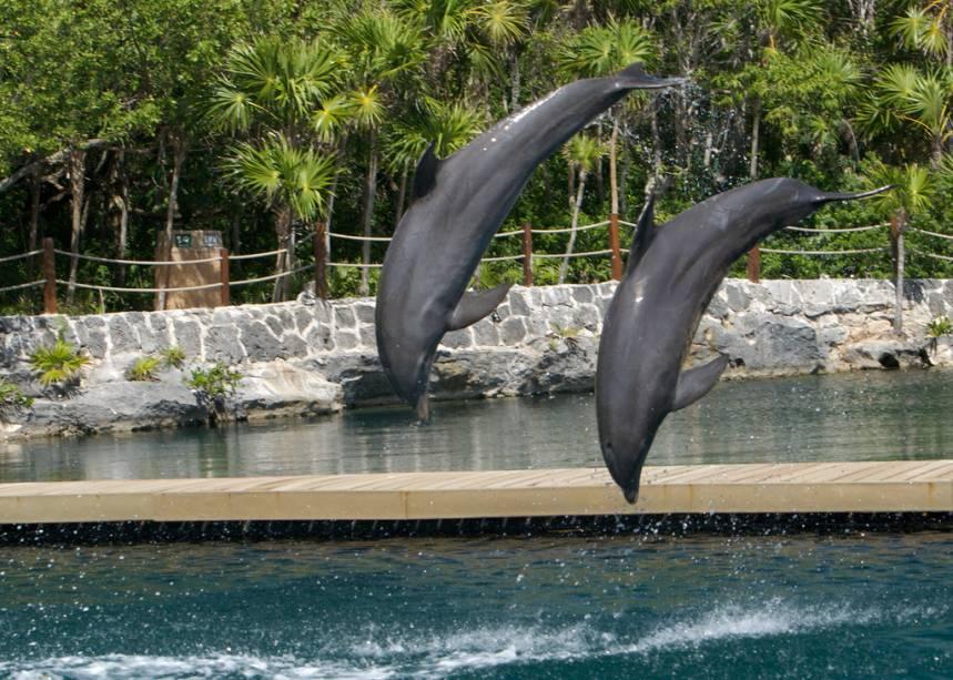 Atividade com golfinhos em Xel-Há