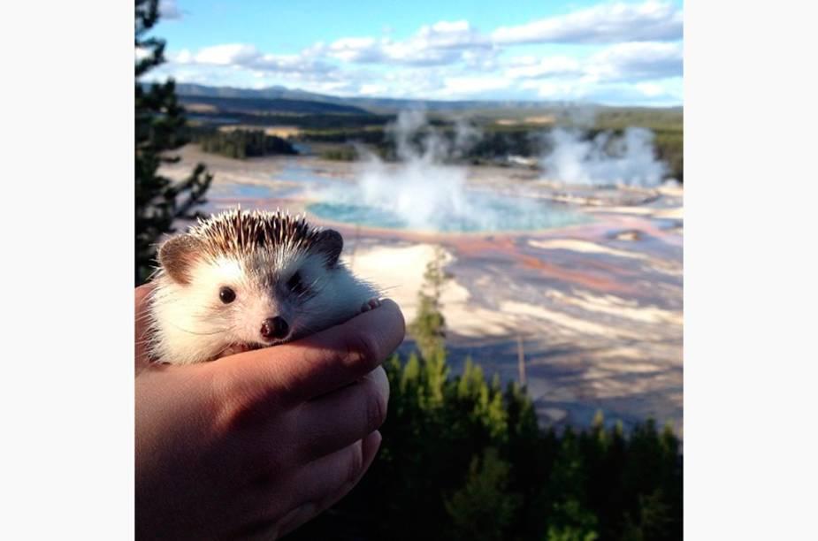 "<a href=""http://instagram.com/biddythehedgehog"" rel=""@biddythehedgehog"" target=""_blank""><strong>@biddythehedgehog</strong></a>            Biddy em Yellowstone, EUA"