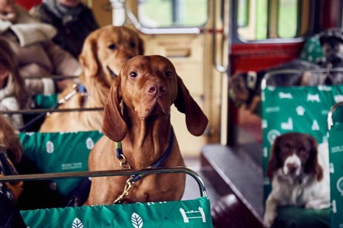 Cachorros Londres