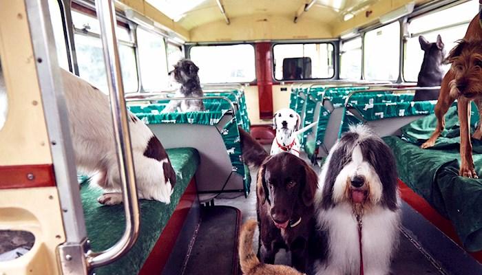 Passageiros, por favor, apertem suas coleiras