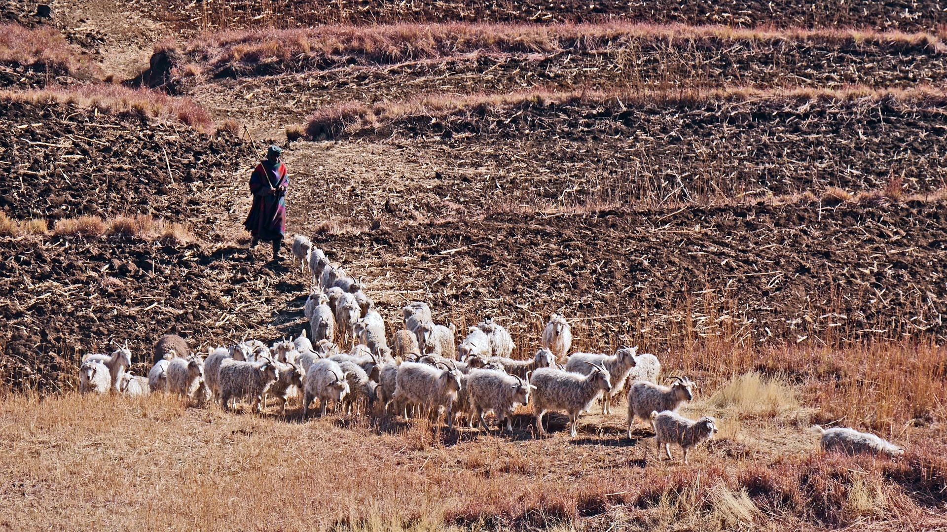 Até as cabras do Lesotho sabem que o país exige visto de brasileiros. Já eu...