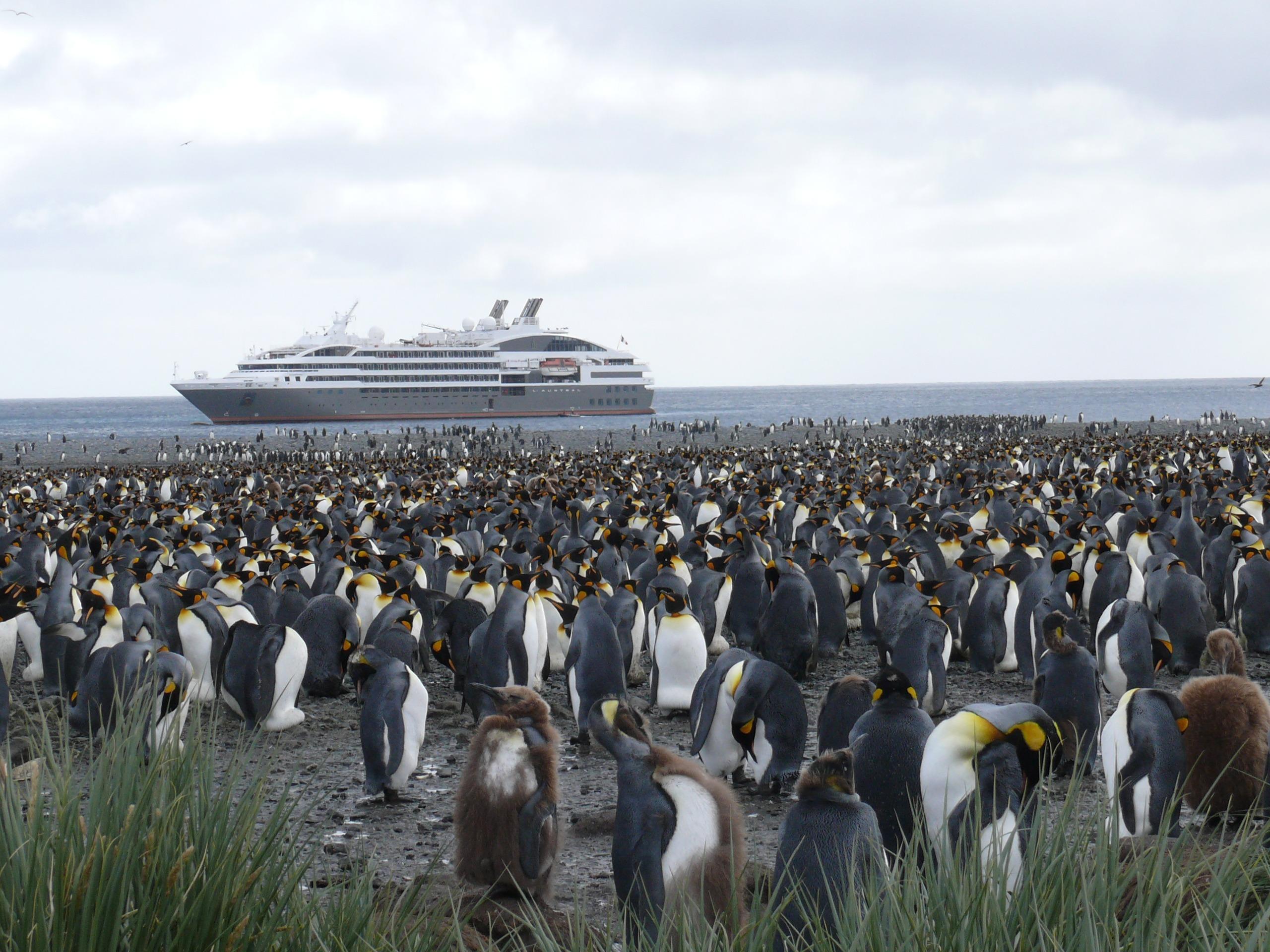 Navio de cruzeiro passa próximo à ilha repleta de pinguins imperadores, na Antártica