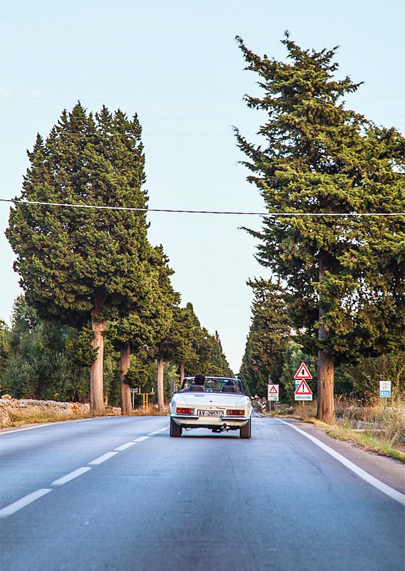 Carro conversível, visto de traseira, percorre um via com altas árvores