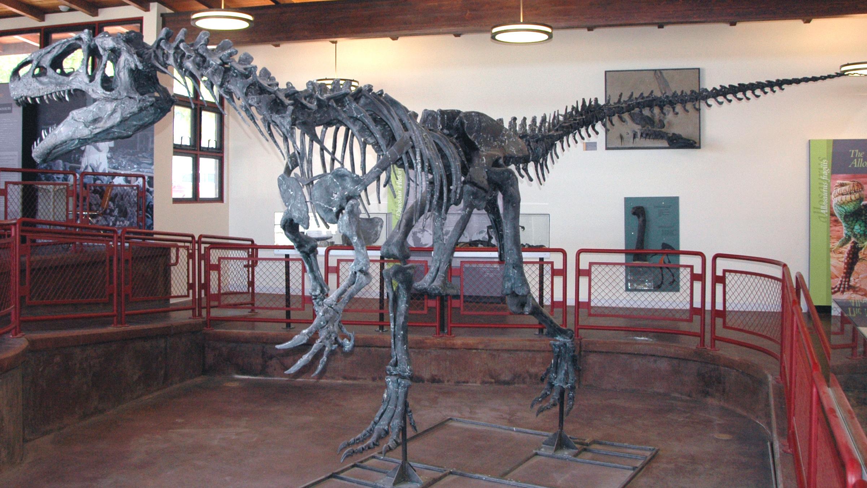 Esqueleto completo de um Alossauro exposto dentro da sala de um museu