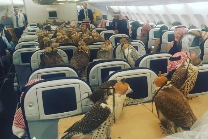 falcoes-do-principe-da-arabia-saudita