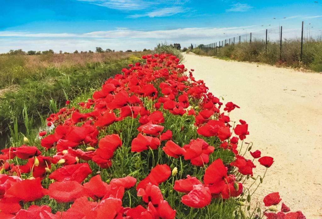 Uma fileira de tulipas se estende da base ao centro da foto, com uma estrada de terra à direita e um riacho e grama à esquerda