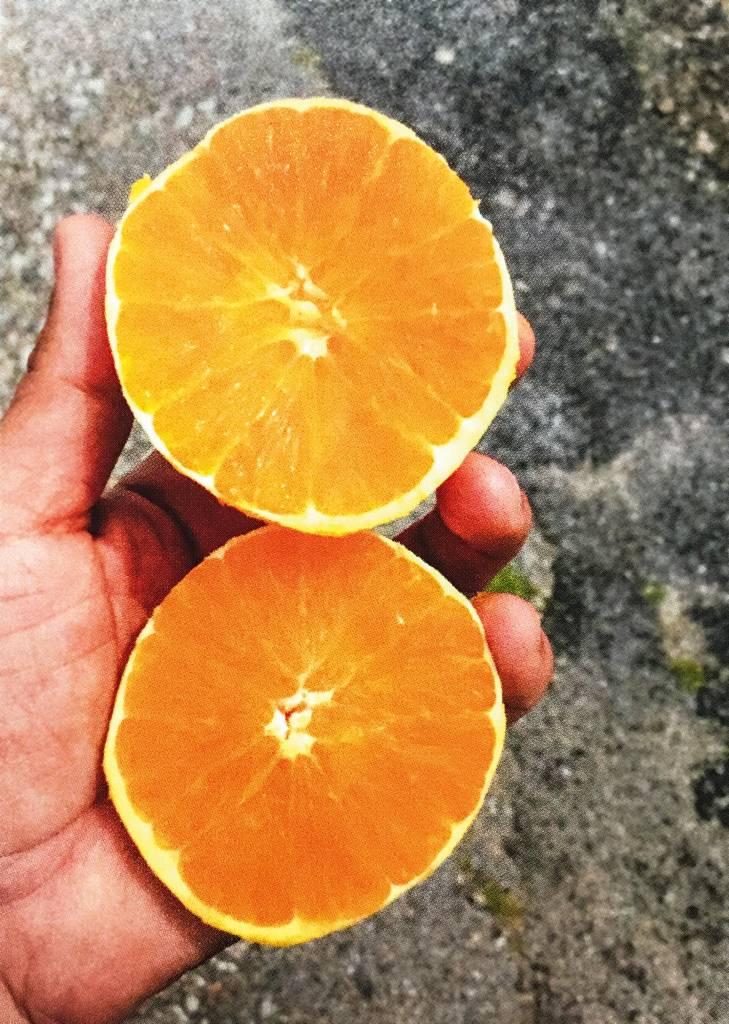 Uma mão dispõe duas laranjas para a foto