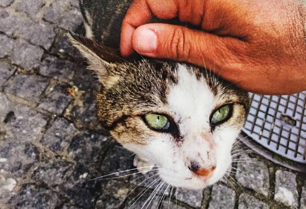 A mão do fotógrafo acaricia a cabeça de um gato, dócil, em uma rua de paralelepípedos de pedra