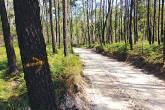 Uma estrada se estende em meio à floresta, enquanto em primeiro plano uma seta pintada à mão no tronco de uma árvore aponta para o caminho