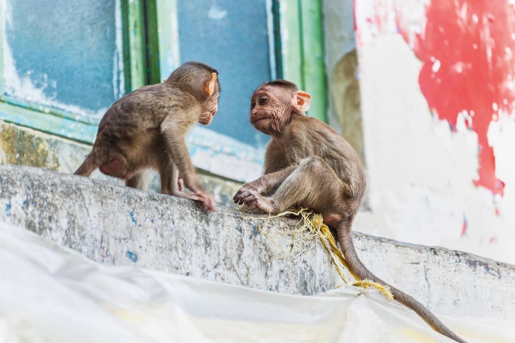 Dois macacos muito jovens brincam no peitoril de pedra de uma janela