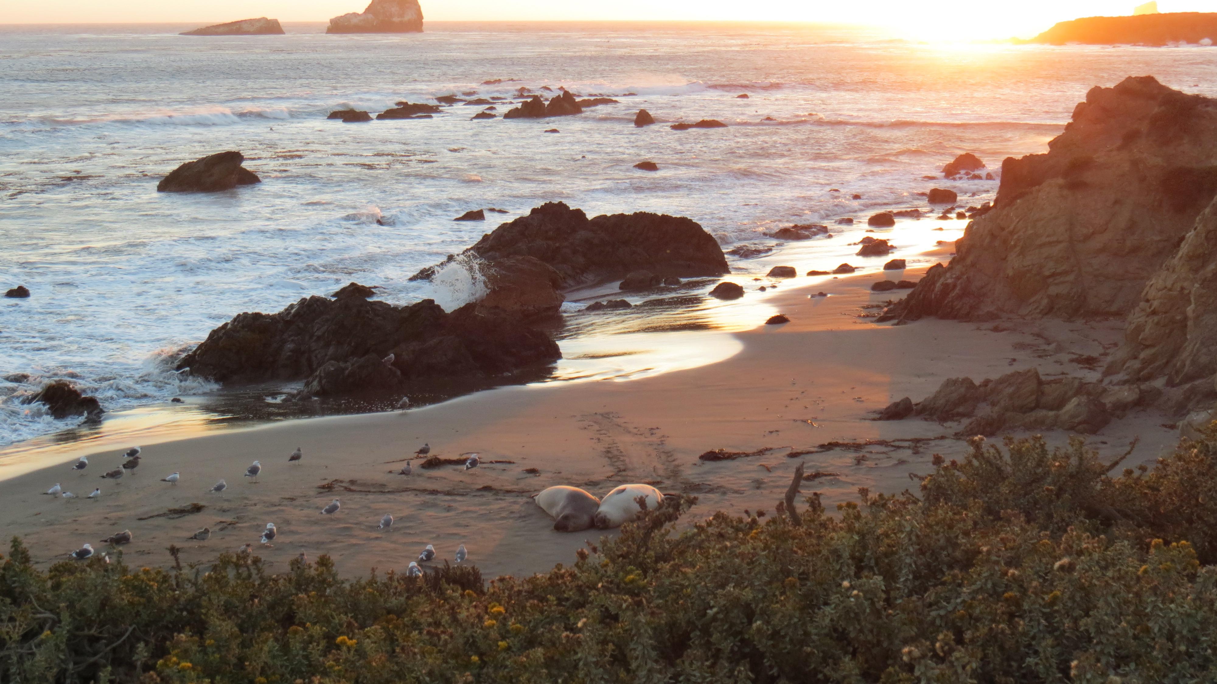 Incrível na hora do pôr do sol, esta praia abriga uma numerosa colônia de elefantes-marinhos, que podem ser observados de um mirante. Outra atração da rota que você ainda consegue acessar.