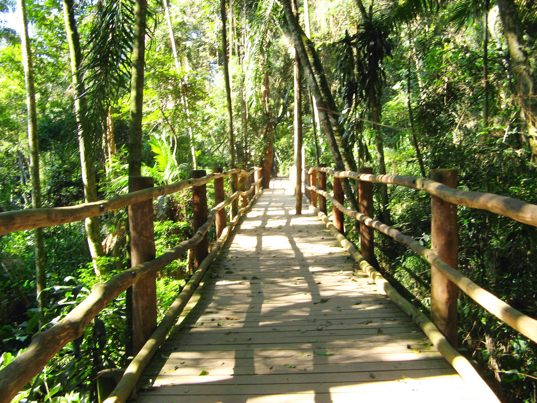 Trilha da Nascente do Rio Ipiranga no Jardim Botânico de São Paulo (SP)