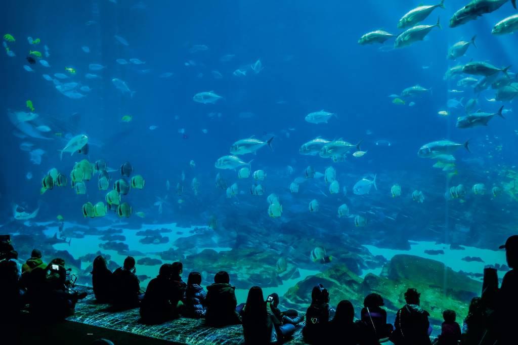 Um aquário enorme com crianças sentadas à frente, dando a impressão de estarem sentadas no fundo do oceano