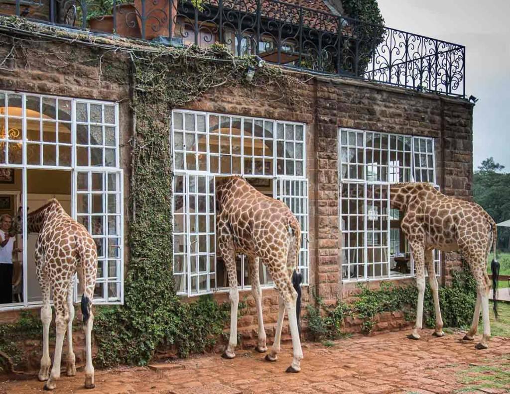 Giraffe Manor, Nairóbi, Quênia