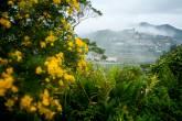 Vista geral da cidade de Paranapiacaba, na Serra do Mar, interior de São Paulo; em primeiro plano, plantas com flores, e ao fundo, a serra repleta de névoa