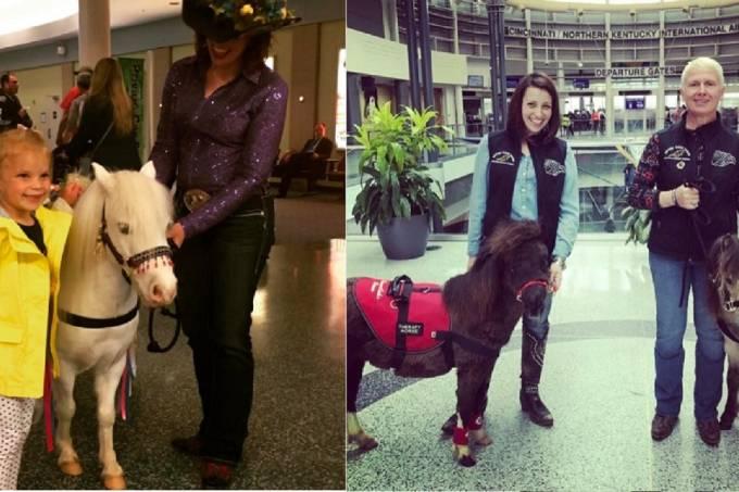 Mini-cavalos  –  Aeroporto Internacional de Cincinnati,